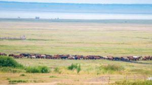 Договор аренды земли сельхозназначения без проведения торгов